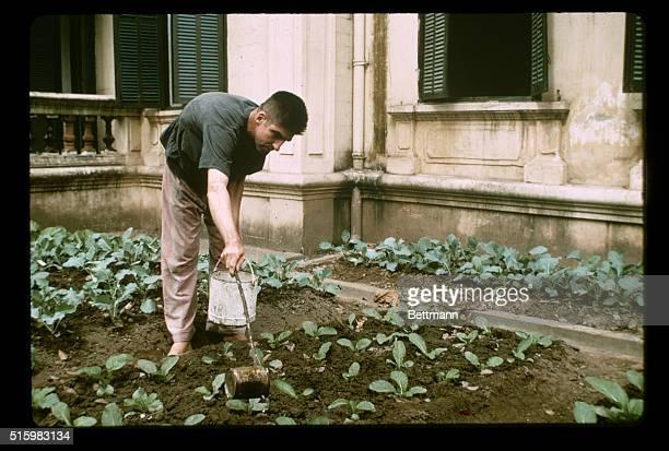 Somewhere in North Vietnam- U.S. Navy Lieutenant Commander Richard Allen Stratton waters vegetables in a North Vietnamese prisoner-of-war camp on...