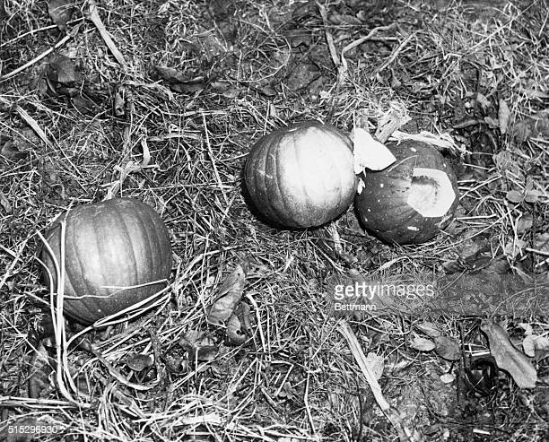 12/4/48Westminster MD A bunch of microfilms found in the hollowedout pumpkin on a Maryland farm offers conclusive evidence that National Security...