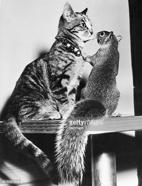 12/8/1949New York NY It happened at the Hotel McAlpin where cats and kittens are holding forth in annual feline show 'Jungle Baby' an alley cat was...