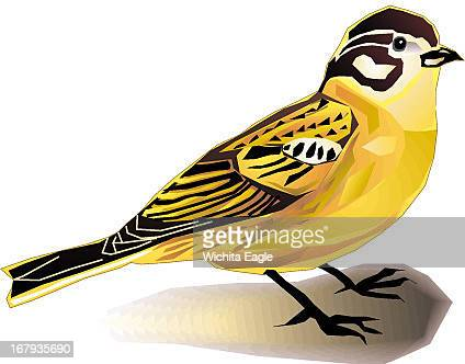 12p x 10p Randy Stephenson color illustration of a Clark's longspur