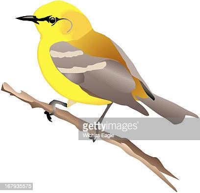 12p x 12p Mike Marlett color illustration of a bluewinged warbler