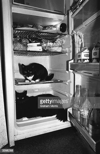 Two cats sitting in a domestic refrigerator.