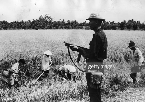 Vietnamese home-guard protects rice-paddy field workers in the Mekong Delta against attacks from guerillas who want to impede the South Vietnamese...