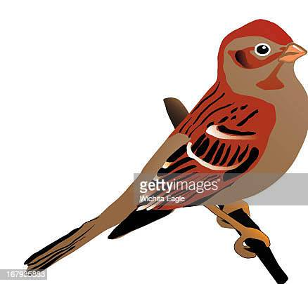 13p x 12p Mike Marlett color illustration of a field sparrow