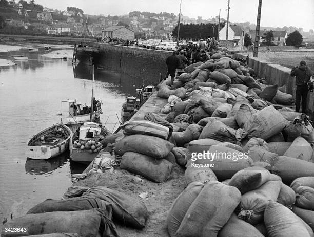 Bags of sawdust are piled onto the wharf at Perros Guirec in Brittany France following the recent oil spill from the tanker 'Torrey Canyon'