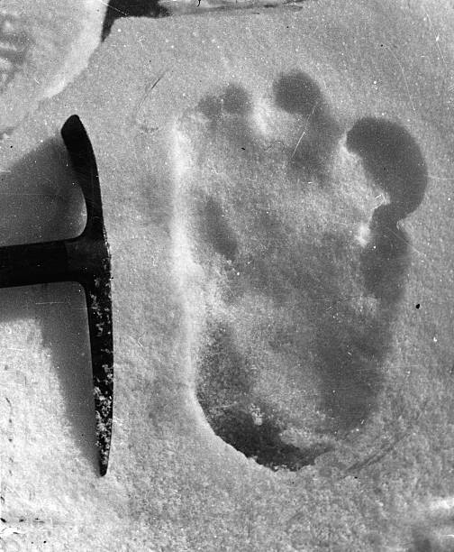 The footprint of the Abominable Snowman, taken near...