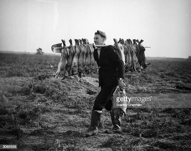 Mr Cook with his catch of some thirty rabbits after three hours' work.