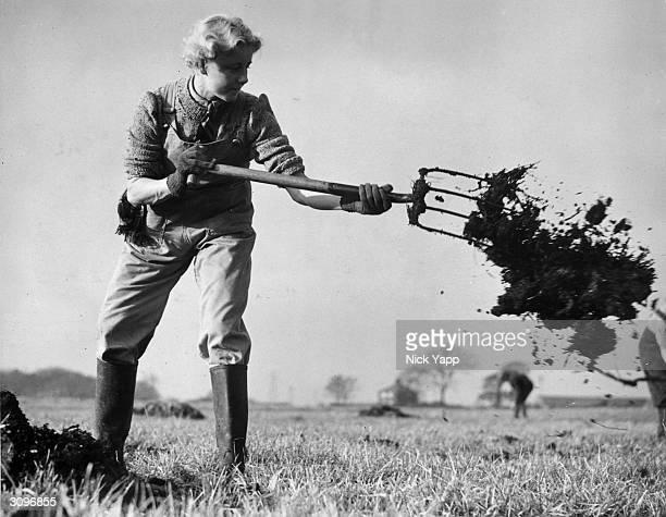 Miss M Haslam a former riding instructress from Southport spreads manure over a field at the Lancashire Institute of Agriculture in Freston Suffolk...