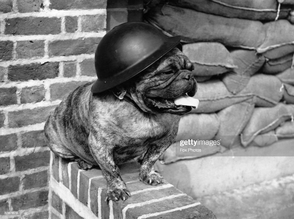 A bulldog stands guard outside a block of flats in South London.