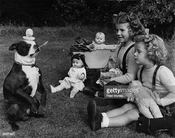 Roger the five year old Boston Terrier performing one of his various tricks watched by two young girls Roger's repertoire of tricks includes ballet...