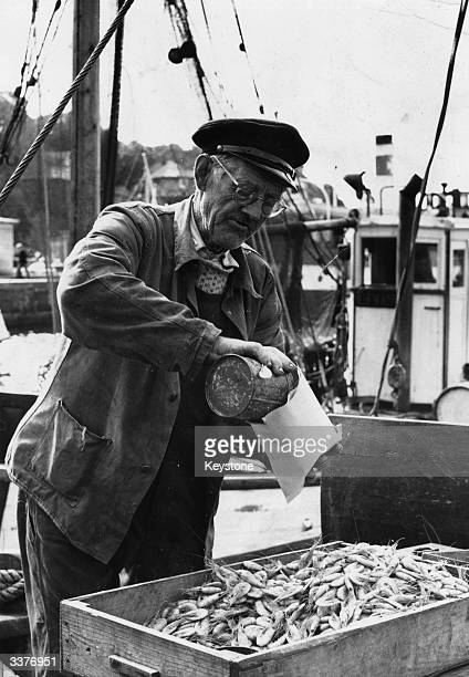 A Norwegian fisherman serves out a portion of the shrimps he has trawled from the Firth of Oslo outside Oslo Town Hall