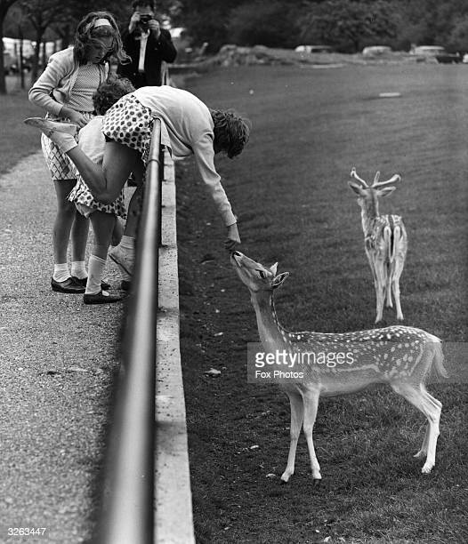 Children feed the fallow deer at Whipsnade Zoo in Bedfordshire