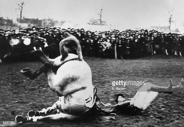 J C Phillips and his mount 'Grey Count' falling at the last jump in the Leicester hunt steeplechase at Melton Mowbray