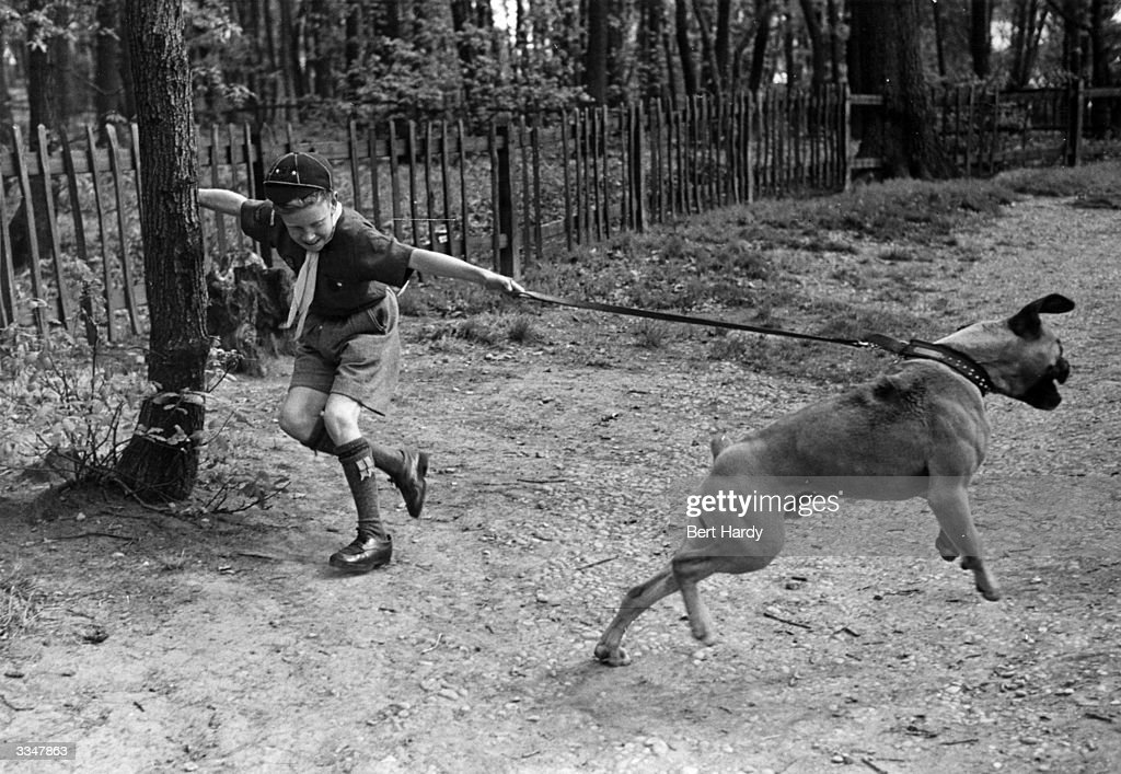 A Boy Scout has trouble walking a large dog in the park. Original Publication: Picture Post - 4779 - Six Bobs Worth - pub. 1949