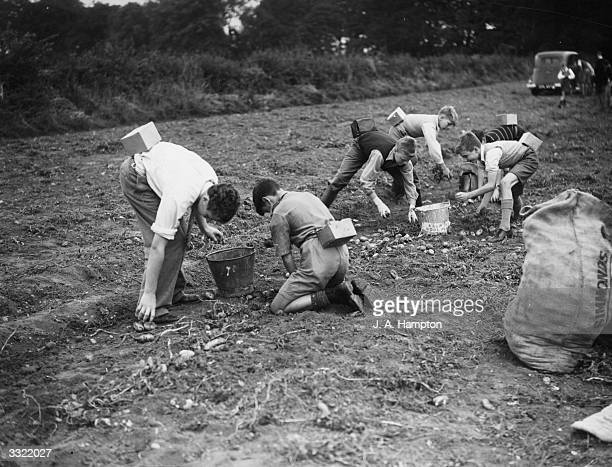 A group of six young evacuees pick potatoes in a Surrey field during World War II All carry gas masks on their backs