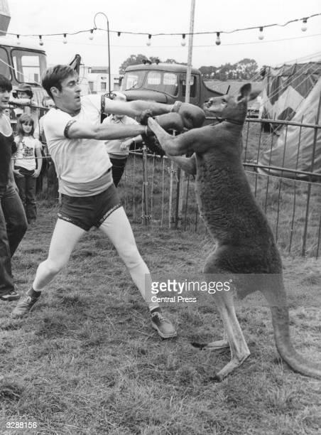 Radio 1 disc jockey Paul Gambaccini takes on a boxing kangaroo at Eastbourne circus