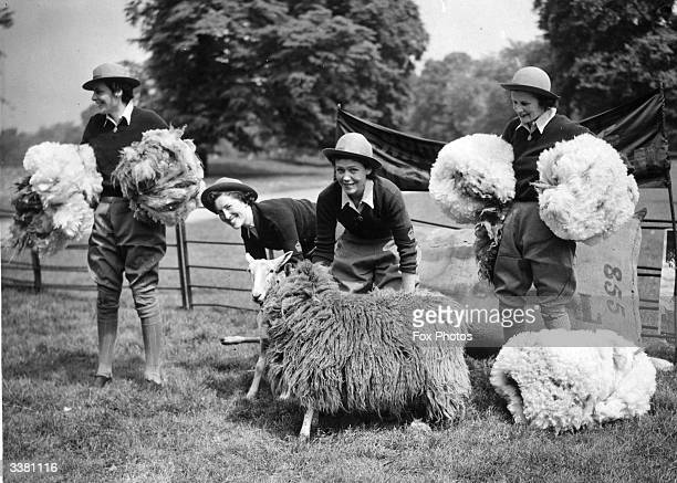 Four members of the WLA shearing sheep in London's Hyde Park