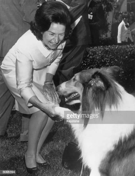 Claudia Alta Johnson known as Lady Bird Johnson the wife of US president Lyndon B Johnson meets Lassie at the White House Washington DC The famous...