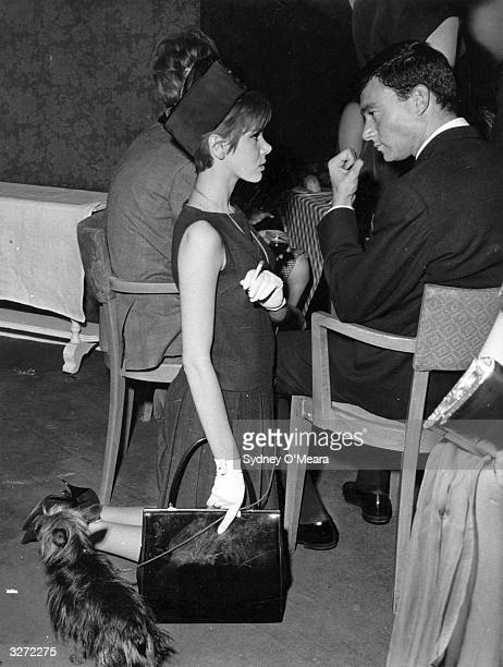 Hairdresser Vidal Sassoon talking to Miss Judy Carne who kneels beside him with her dog