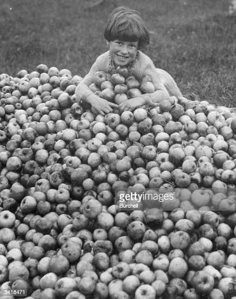 Happy girl amongst the new crop of cider apples in a Somerset orchard near Taunton.