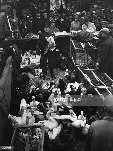 Live turkeys ducks and chickens for sale at the Caledonian Market London in time for Christmas dinner