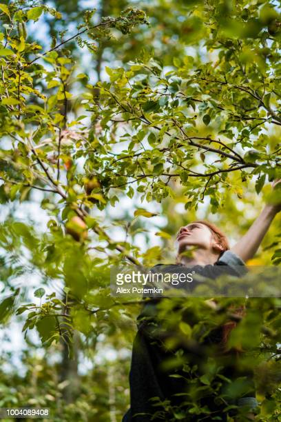 17-years-old teenager girl picking organic pears from the tree in the orchard