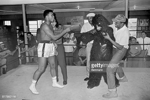 1/8/1964Miami Beach FL That ape is almost as ugly as Sonny says Cassius Clay as he clowns around with a Ringling Brothers Circus clown dressed in a...