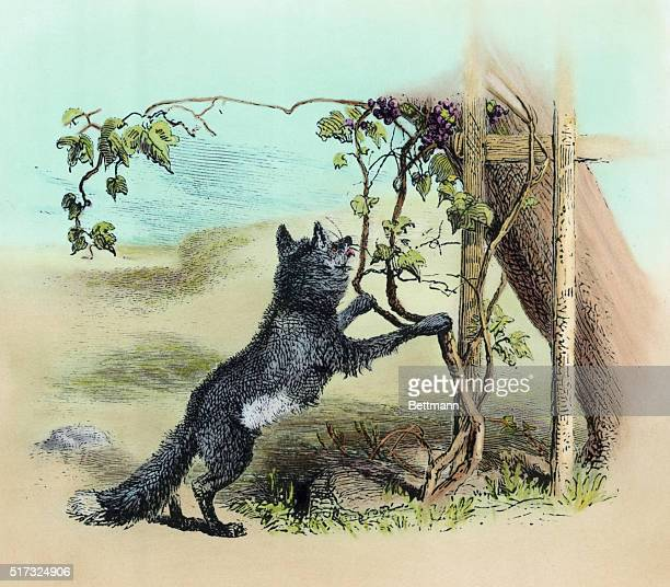 1879'The Fox and the Grapes' from Aesop's Fables Fox tries to reach unattainable grape vine Engraving by Herrick 1879