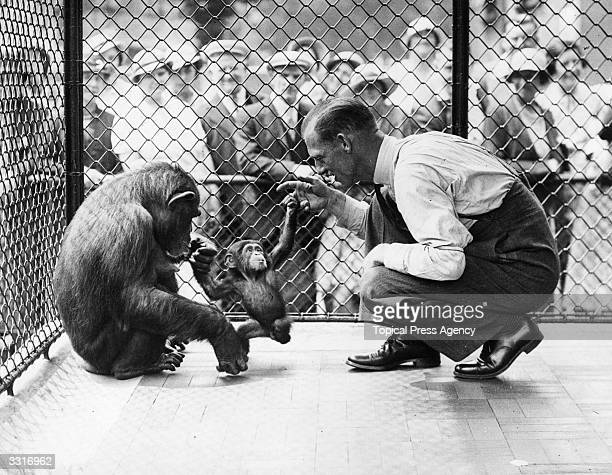 A crowd watches as Jubilee a monkey at London Zoo and her baby Boo Boo play with one of the keepers F Shelly