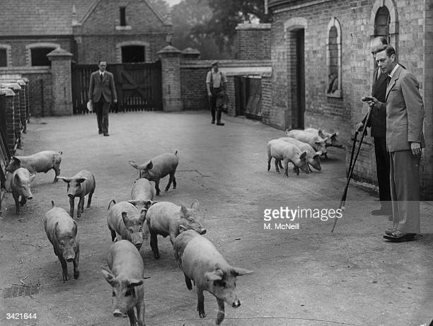 King George VI inspecting the pigs on his farm in Windsor Great Park