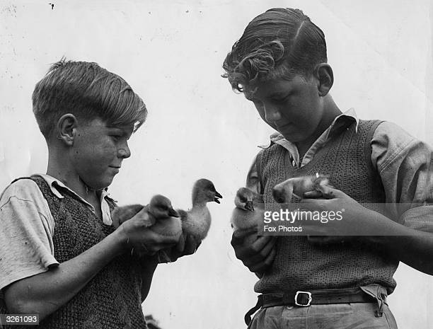Two evacuee schoolboys from the Young Farmers club formed at Elmbridge Camp School Cranleigh holding some goslings