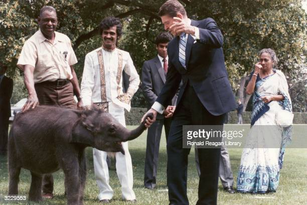 US President Ronald Reagan holds the trunk of a baby elephant presented to him in a ceremony by President Jayewardene of Sri Lanka An attendant...