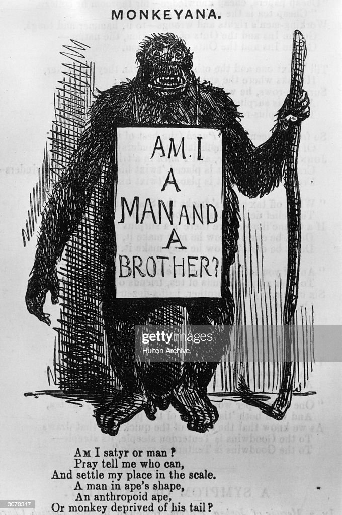 A gorilla wears a sandwich-board which asks the question 'Am I a Man and a Brother?', in answer to Charles Darwin's controversial theory on the evolution of the human race. A cartoon from Punch magazine signed by 'Gorilla - Zoological Gardens'.