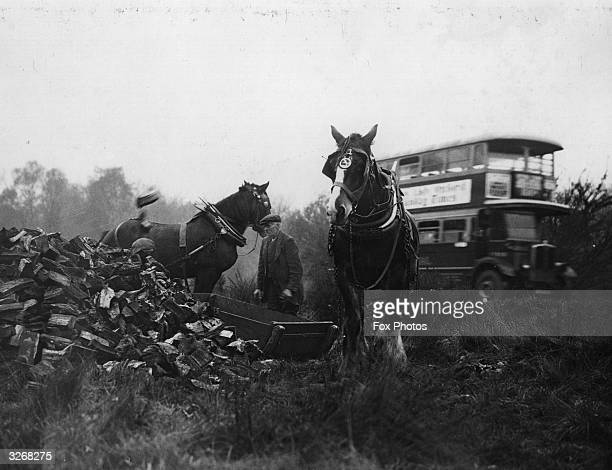 Logs stacked by the roadside in Epping Forest where authorities decided to clear and sell the wood of over 8000 trees which had fallen down