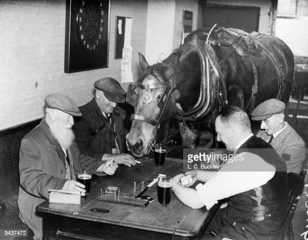 Mr Jack Fowler a coal merchant in Bedford regularly brings his horse Sam into the public bar of the Balloon Inn for a beer and a game of dominoes...