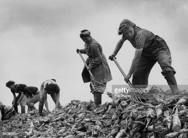 Landgirls working in the beet fields of Lincolnshire during World War II