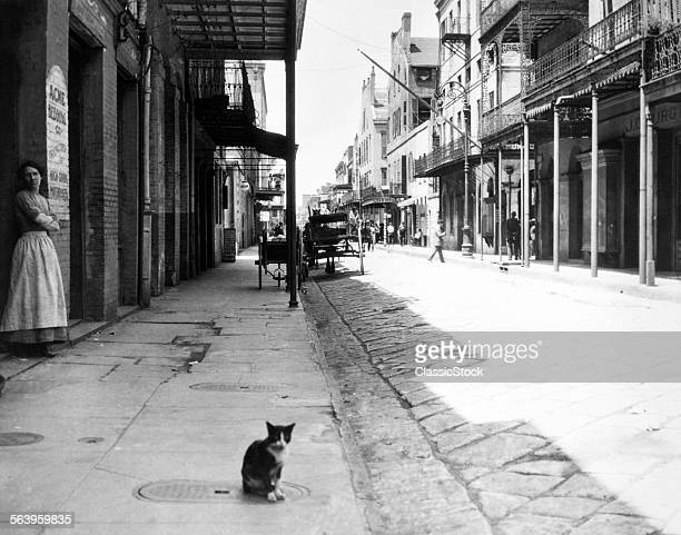 1900s CAT SITTING STREET OLDER SECTION OF NEW ORLEANS LOUISIANA USA
