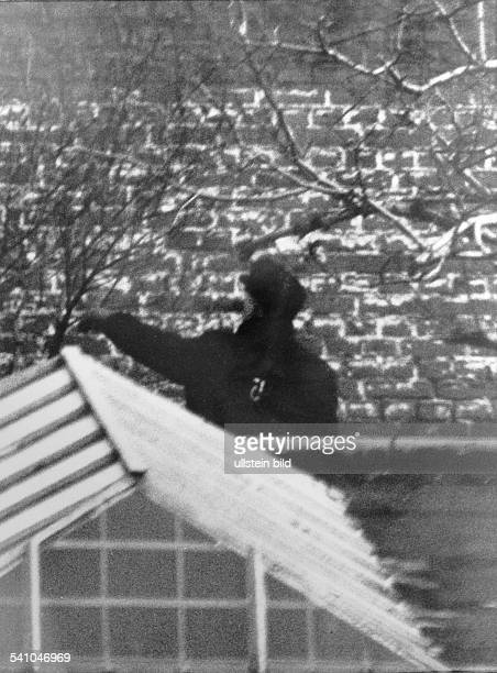 *Architekt D der ehem Reichsminister für Rüstung und Kriegsproduktion bei Arbeiten im Garten des KriegsverbrecherGefängnisses in Berlin Spandau...