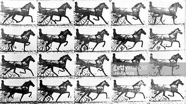 1830 1904Fotograf GBBewegungsstudie eines trabenden Pferdes 1879
