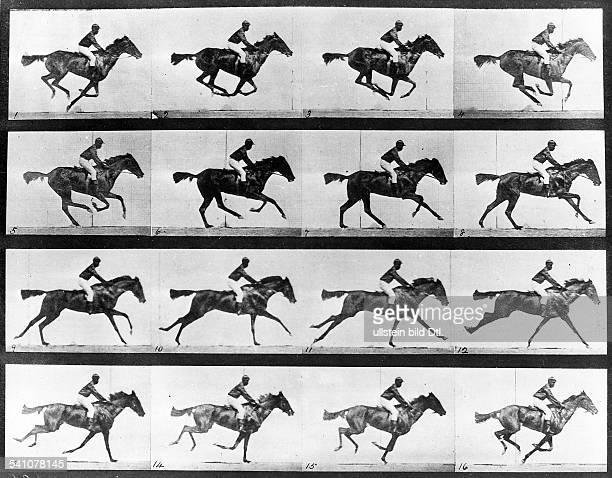 1830 1904Fotograf GBBewegungsstudie galoppierendes Pferdmit Reiter