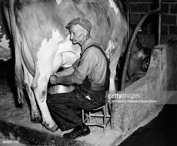 1930s 1940s ELDERLY FARMER IN OVERALLS MILKING GUERNSEY COW