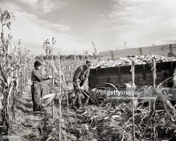 1930s 1940s small farm couple husband and wife hand picking and shucking field corn hoyleton illinois USA