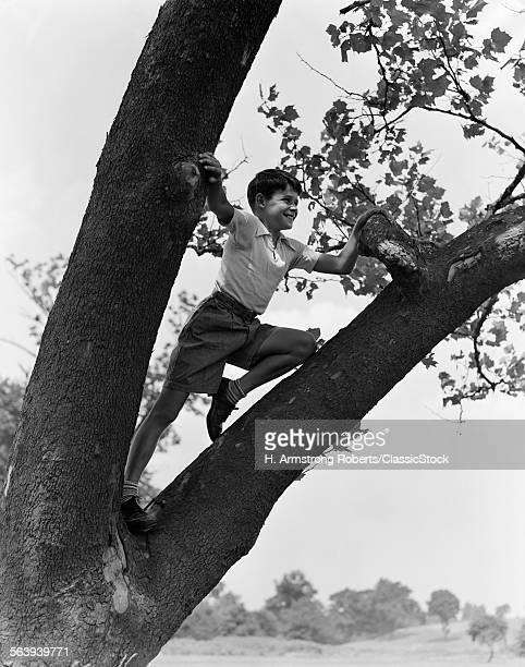 1930s CHILD BOY CLIMBING IN TREE