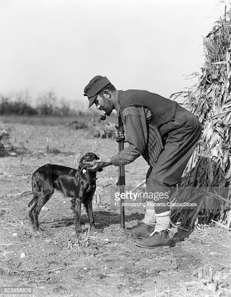 1930s MAN HUNTER WITH SHOTGUN IN CORN FIELD TAKING BIRD FROM IRISH SETTER DOG