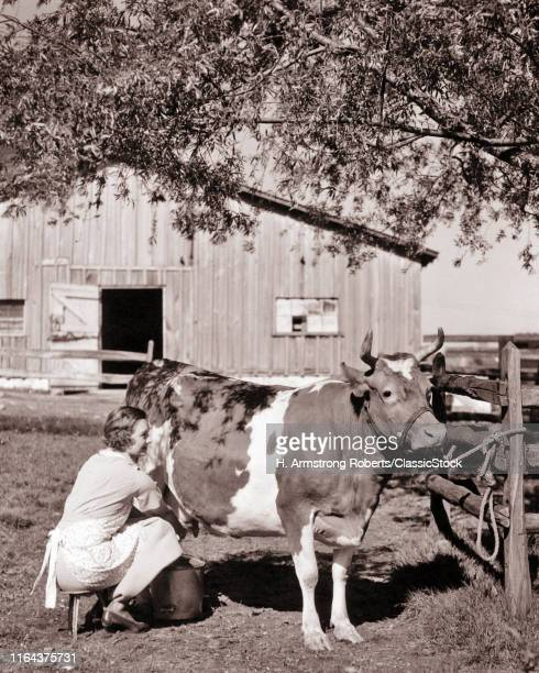 1930s Woman Farm Wife Sitting On Three Leg Stool Milking Guernsey Cow Tied To Fence In Barnyard Under Shade Tree