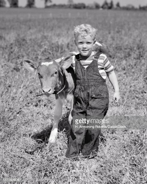 1940s 1950s Blonde Boy Leading Jersey Calf On Dairy Farm Marlton New Jersey USA.