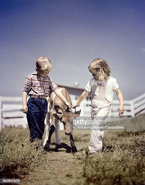 1940s 1950s BOY GIRL LEADING YOUNG CALF ON FARM