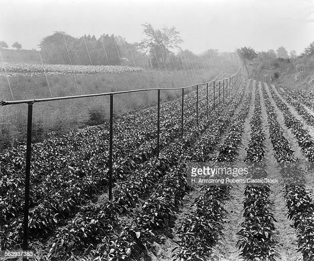 1940s FARMING CROPS IRRIGATION