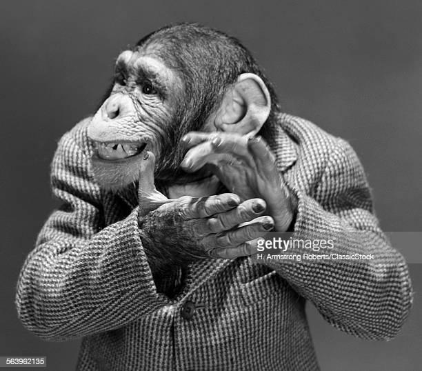 1950s 1960s MONKEYIMP...
