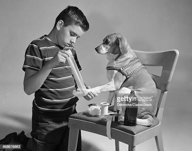 1950s DOG SITTING ON CHAIR WITH PAW BEING BANDAGED BY BOY